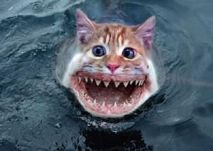 sea-kitten1