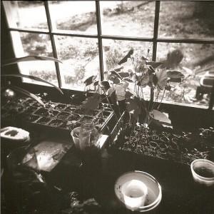 windowsill-2